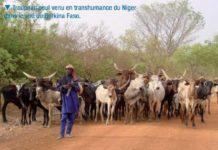 Un troupeau de vaches divague dans le champ de son marabout, un jeune disciple fusille le berger