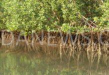 Tendouck : Les eaux et forêts offre un matériel d'une valeur de 30.000.000 FCFA pour la restauration de la mangrove