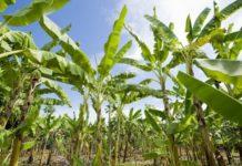 Le premier E-learning agricole en Afrique verra bientôt le jour au Sénégal.