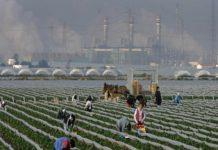 Emigration clandestine : le ministre de l'Intérieur espagnol annonce la fermeture des champs