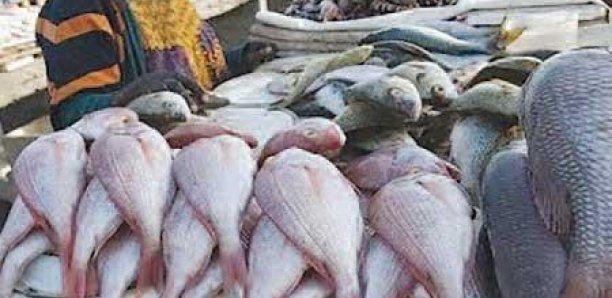 Abdoulaye Diouf Sarr : «La maladie n'est pas contagieuse, les Sénégalais peuvent manger du poisson»