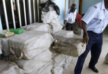 Somone : 600 kg de cocaïne saisis…
