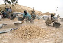 Filière arachidière: 2,056 MILLIARDS F CFA volés à des opérateurs qui pensaient spéculer sur...