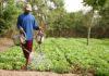 Agriculture: Le SYNTTAS annonce une grève de 10 jours