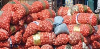 Horticulture Mévente, concurrence déloyale : L'oignon pourrit sur l'axe Keur Moussa-Diender